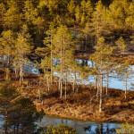 Лайфхак — куда поехать в выходной день за пределы Таллинна