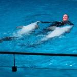 В Клайпеду к дельфинам и динозаврам